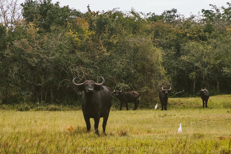 090_HandZaround_Akagera_African_Parks_Rwanda_East_Africa.jpg