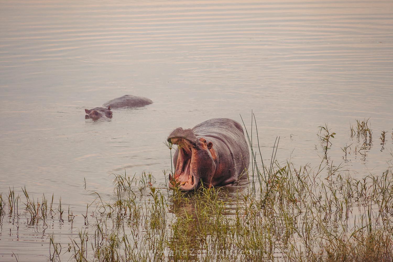 132_HandZaround_Akagera_African_Parks_Rwanda_East_Africa.jpg
