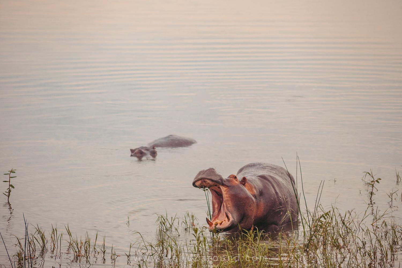 102_HandZaround_Akagera_African_Parks_Rwanda_East_Africa.jpg