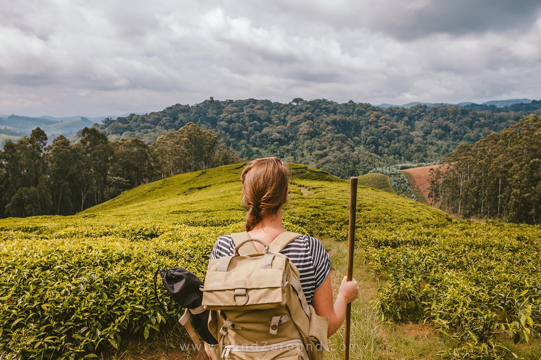 32_Nyungwe_Forest_Rwanda_HandZaround_What_Do_Where_To_Stay_Prices_Chimpanzee.jpg
