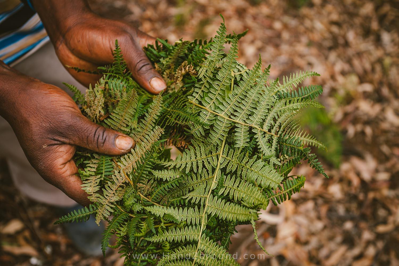 34_Nyungwe_Forest_Rwanda_HandZaround_What_Do_Where_To_Stay_Prices_Chimpanzee.jpg