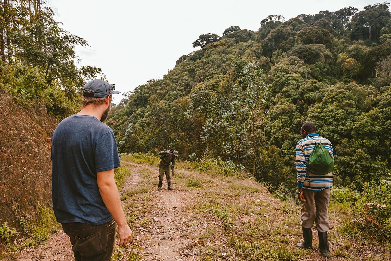35_Nyungwe_Forest_Rwanda_HandZaround_What_Do_Where_To_Stay_Prices_Chimpanzee.jpg
