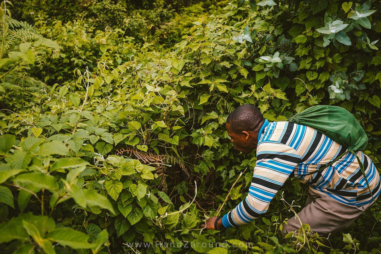 36_Nyungwe_Forest_Rwanda_HandZaround_What_Do_Where_To_Stay_Prices_Chimpanzee.jpg