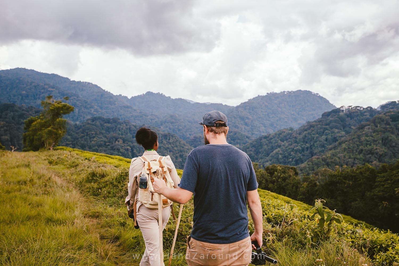 14_Nyungwe_Forest_Rwanda_HandZaround_What_Do_Where_To_Stay_Prices_Chimpanzee.jpg