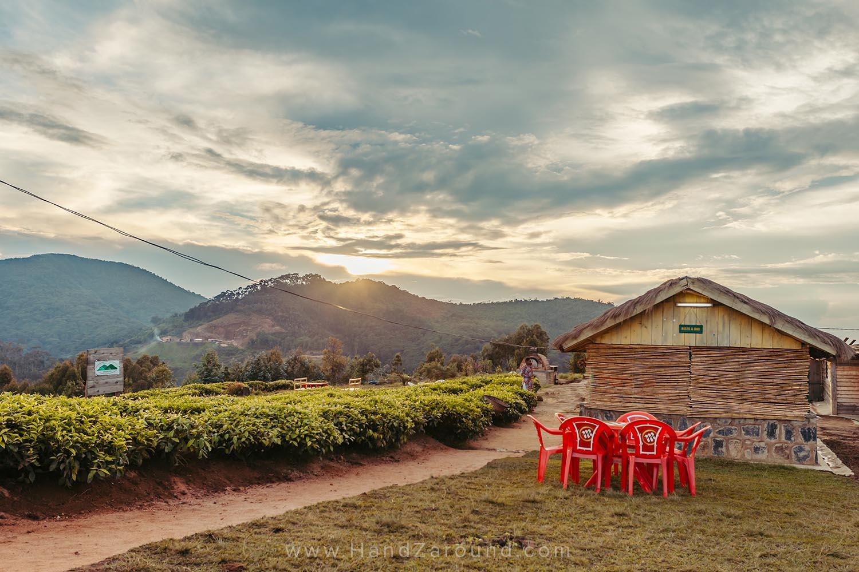 46_Nyungwe_Forest_Rwanda_HandZaround_What_Do_Where_To_Stay_Prices_Chimpanzee.jpg