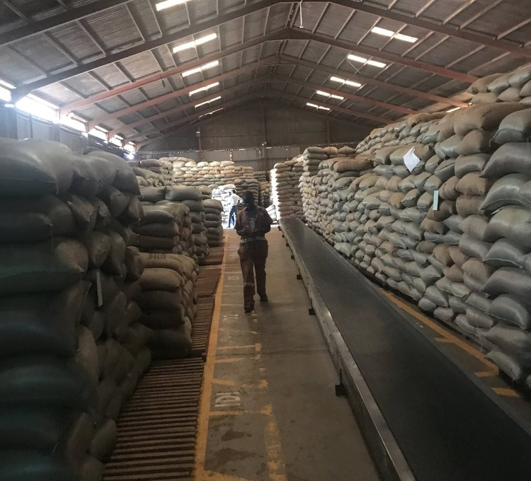 Arrival In United States - Our coffee takes up to 10 weeks to ship from Uganda to the US.