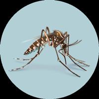 Photo Source: CDC <https://www.cdc.gov/zika/about/index.html>