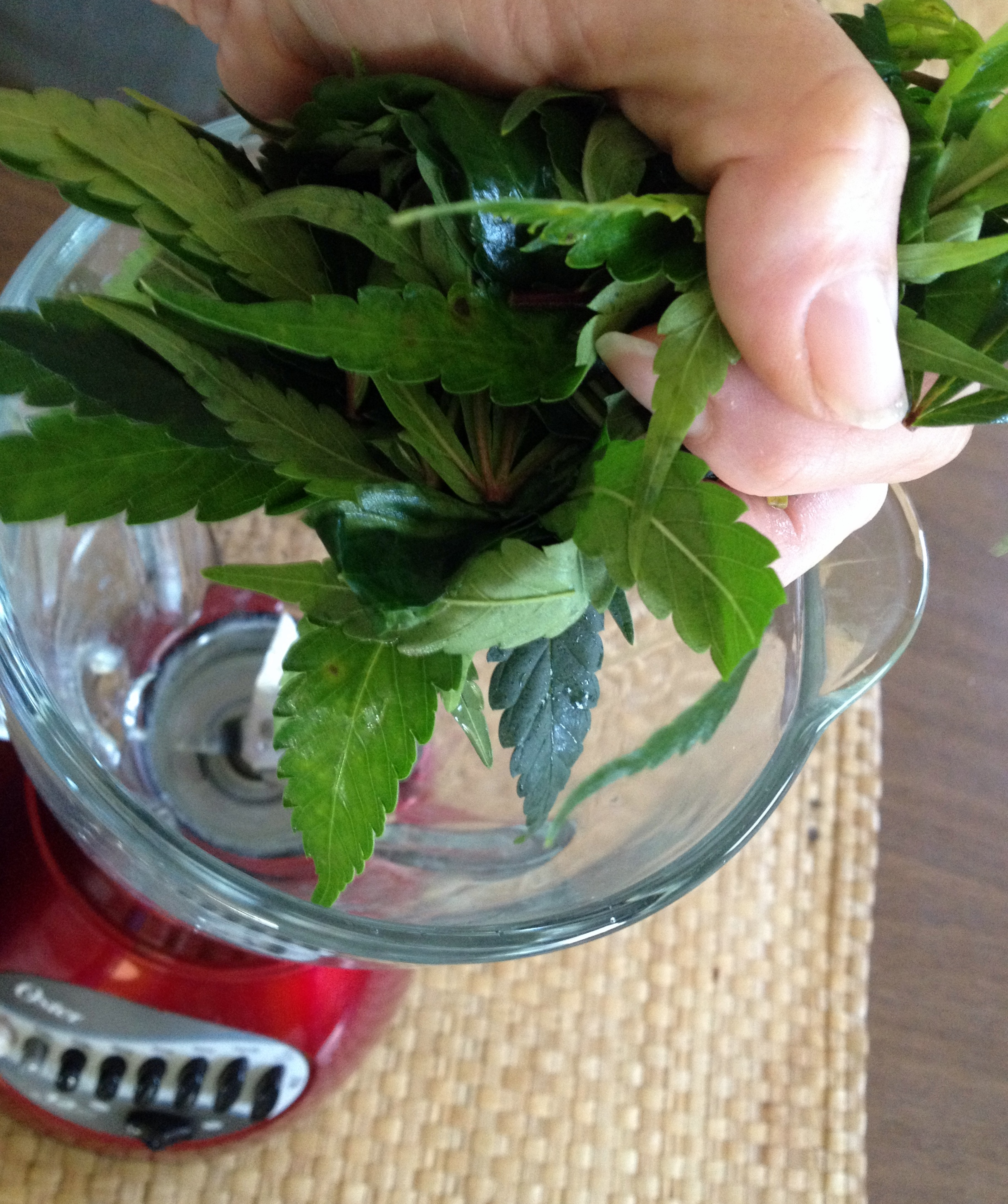 One handful... - ...of leaf in your favorite fruit smoothie is a powerful remedy and preventive against inflammation and subsequent pain; infection, digestive issues, and more, with no psychoactive properties.Favorite Smoothie: One banana, 1/4 cup berries, one cup of aloe vera juice (lowers blood sugars), handful of fresh leaves.Be creative, skies the limit - drink the rainbow!Photo: Sharon Letts