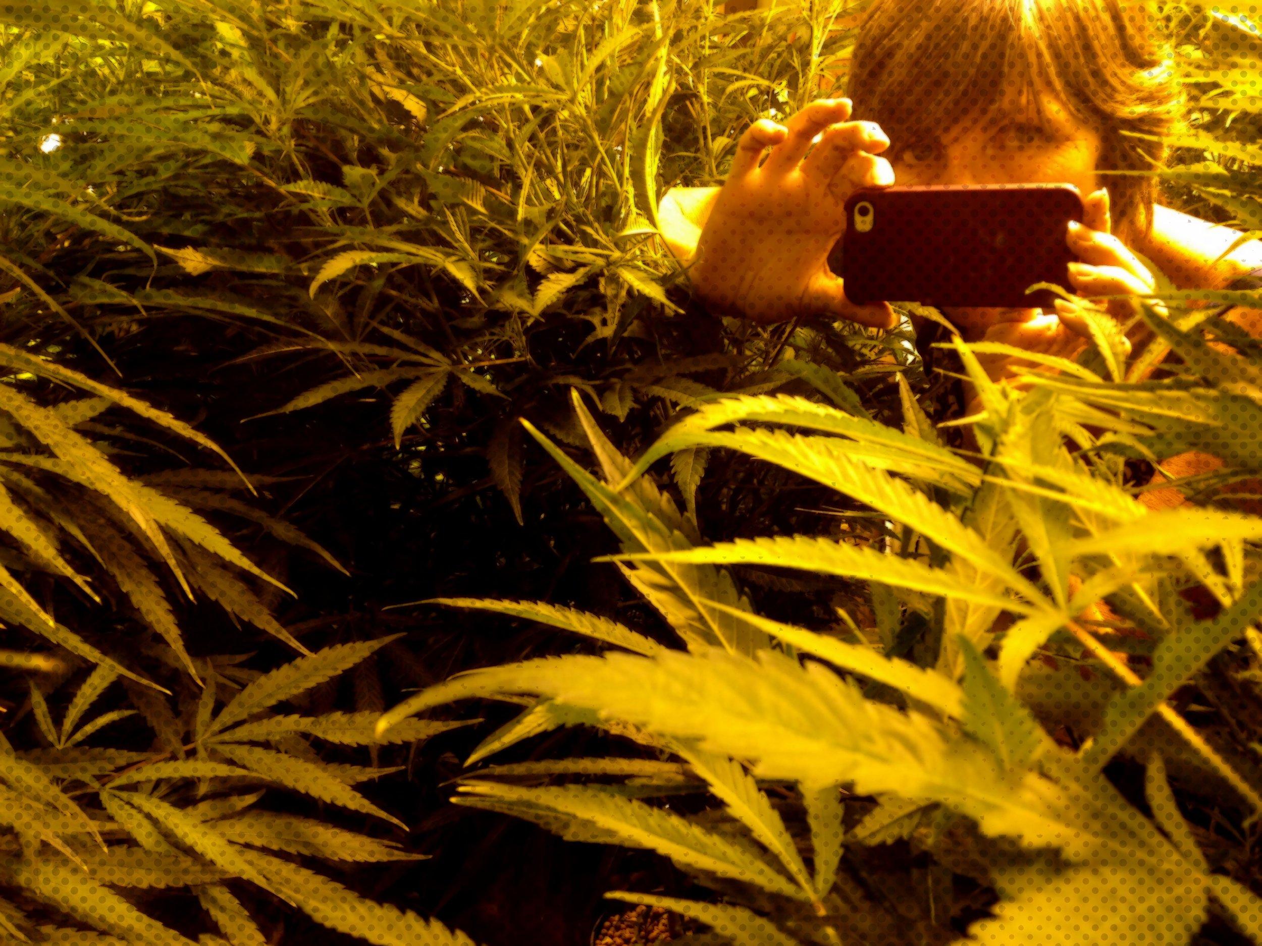 self-portrait, grow room, humboldt county, california photo: sharon letts