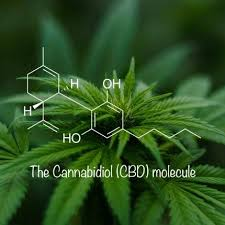 Notes on CBD - Industrial Hemp tests with an average of two to four percent CBD.CBD sourced from cannabis that's been hybridized with low THC, high CBD tests in the ball park of 12 to 14 percent.CBD cultivars with trace THC, less than three percent, are allowed to be labeled as