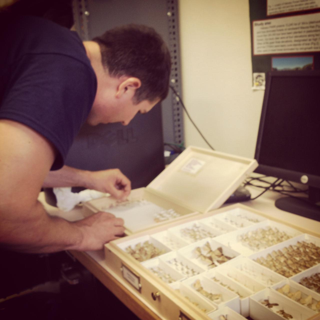 Sorting moth specimens on the Big Island of Hawaii, 2012.