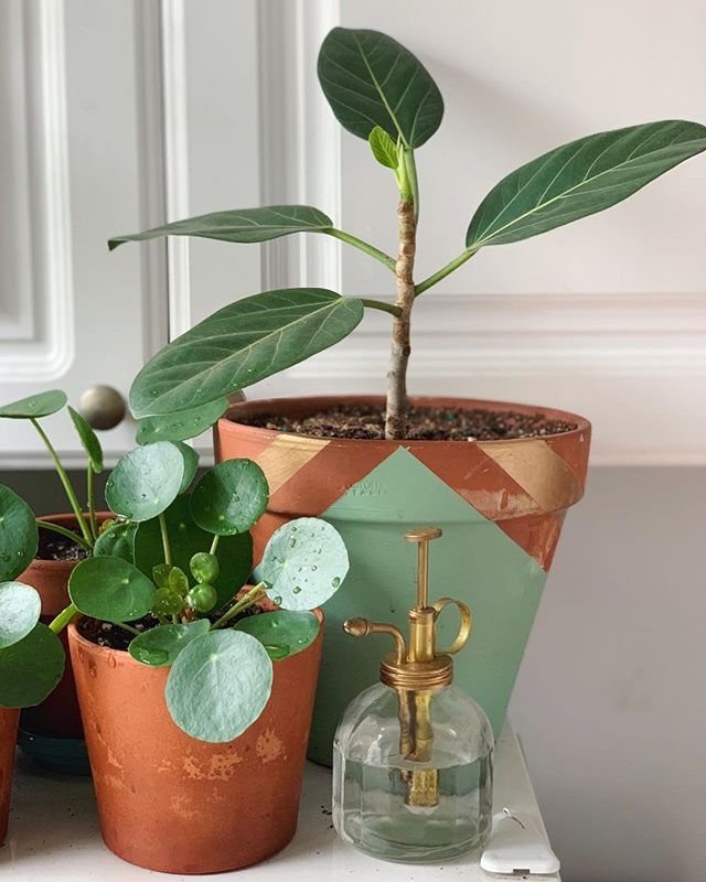 "oh hello! do you ever discover a new leaf and think, ""that's the cutest dang thing i've *ever* seen?"" mmhmm, me too. welcome to the world, baby #ficusaudrey leaf. you're in for a real treat! 👋🏼🌿"