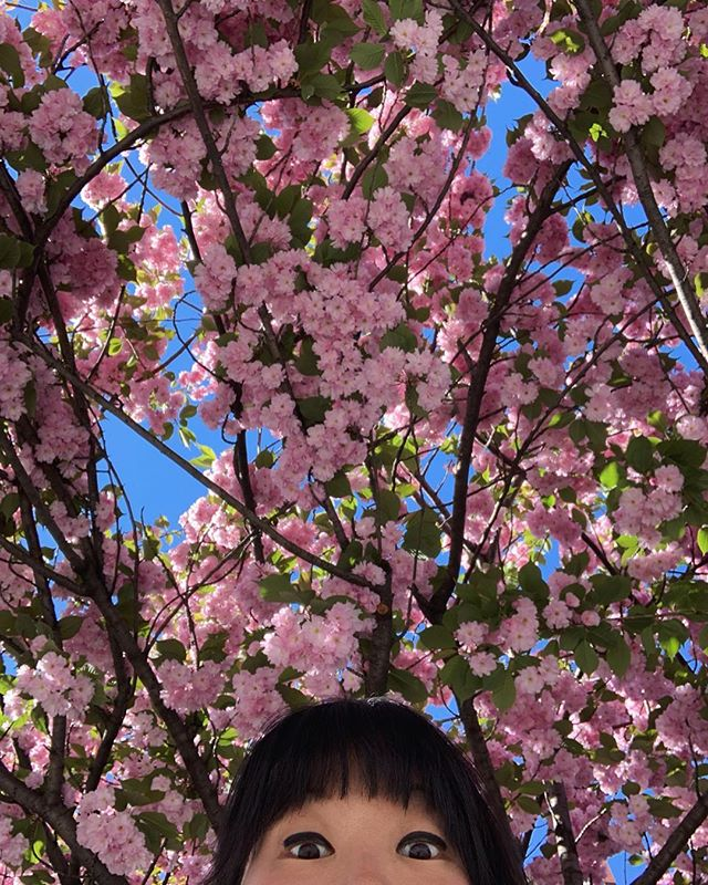 tinybloom, meet bigbloom. i'll really miss marveling at these pretty pink flowers on my morning commute! note to self: remember to say hello to all the nature around me, no matter what the season.  #hellotree #iloveyoutree 🌸