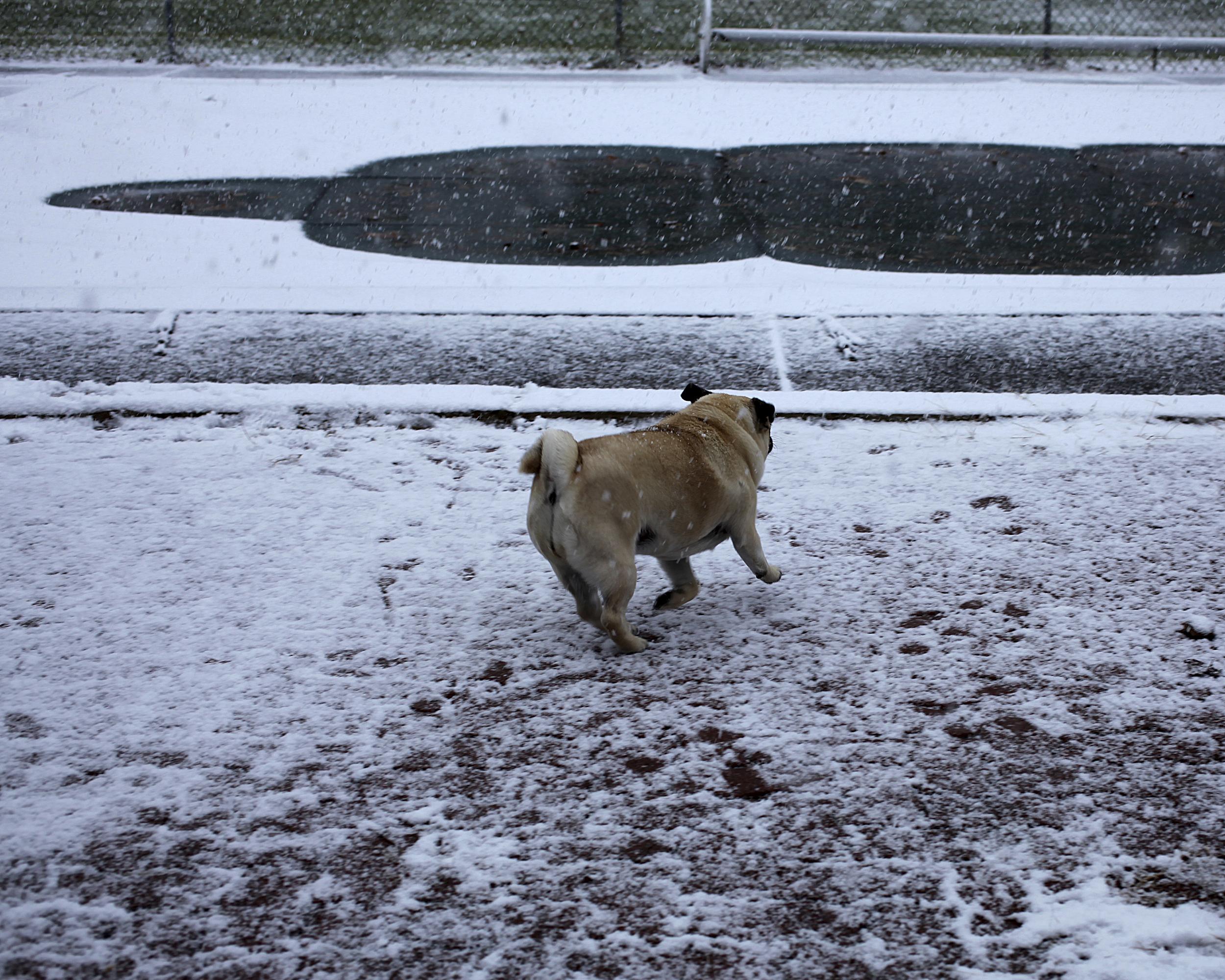 27 Portfolio-Dashing Through the Snow.jpg