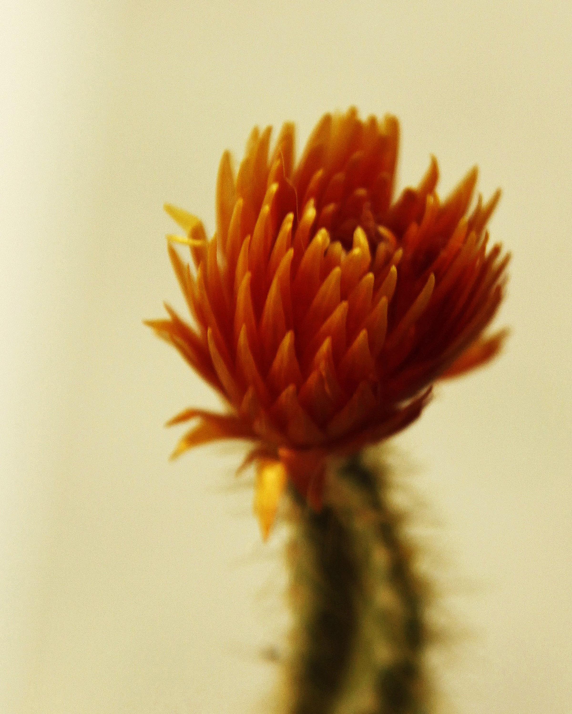 40 Portfolio Cactus Flower.jpg