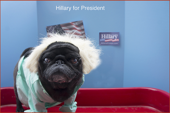 Waffles is voting for Hillary this election.