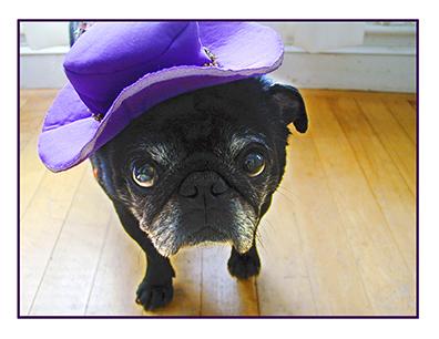 Pugs in Hats 1.jpg
