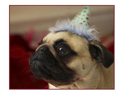Pugs in Hats 4.jpg