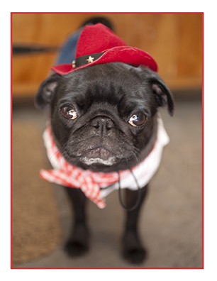 Pugs in Hats2.jpg