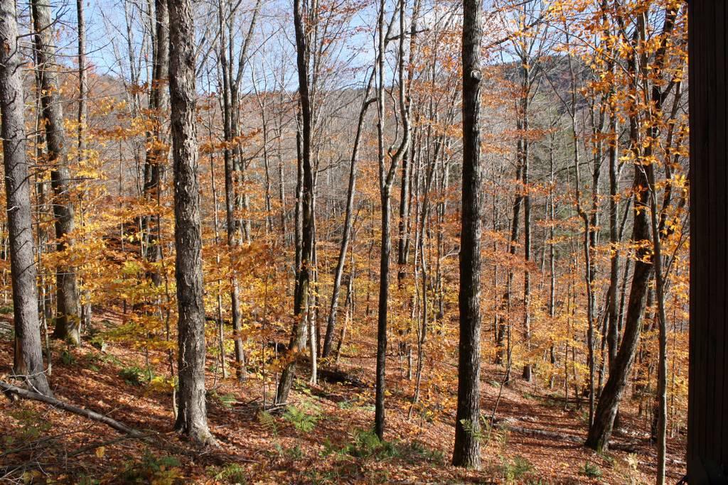 forestlandscape.jpg