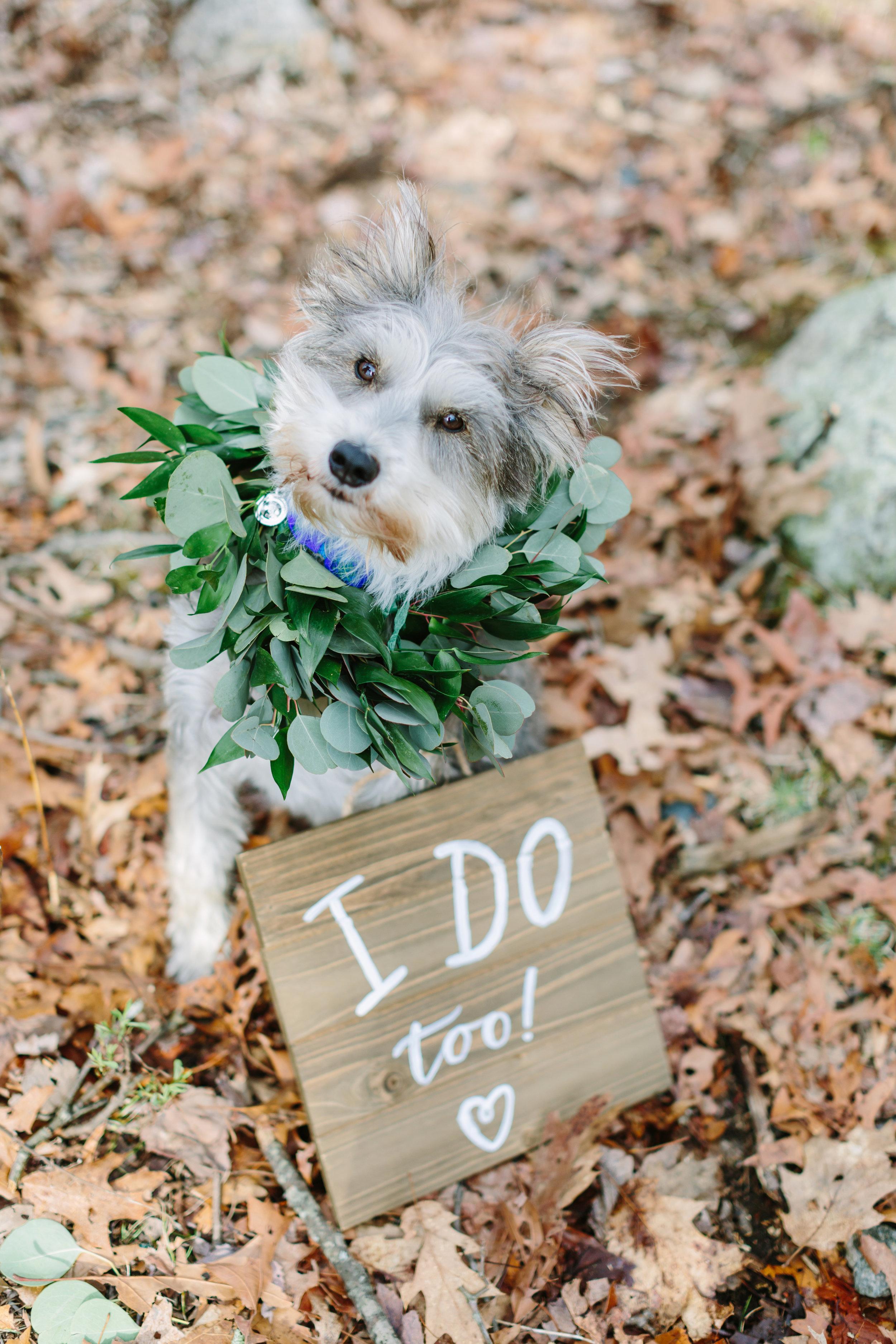wedding_dog.jpg