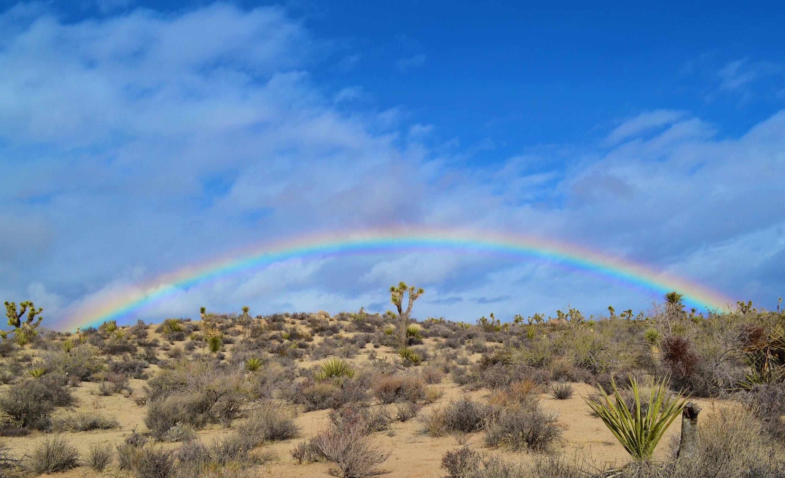 Joshua Tree National Park in the Mojave Desert