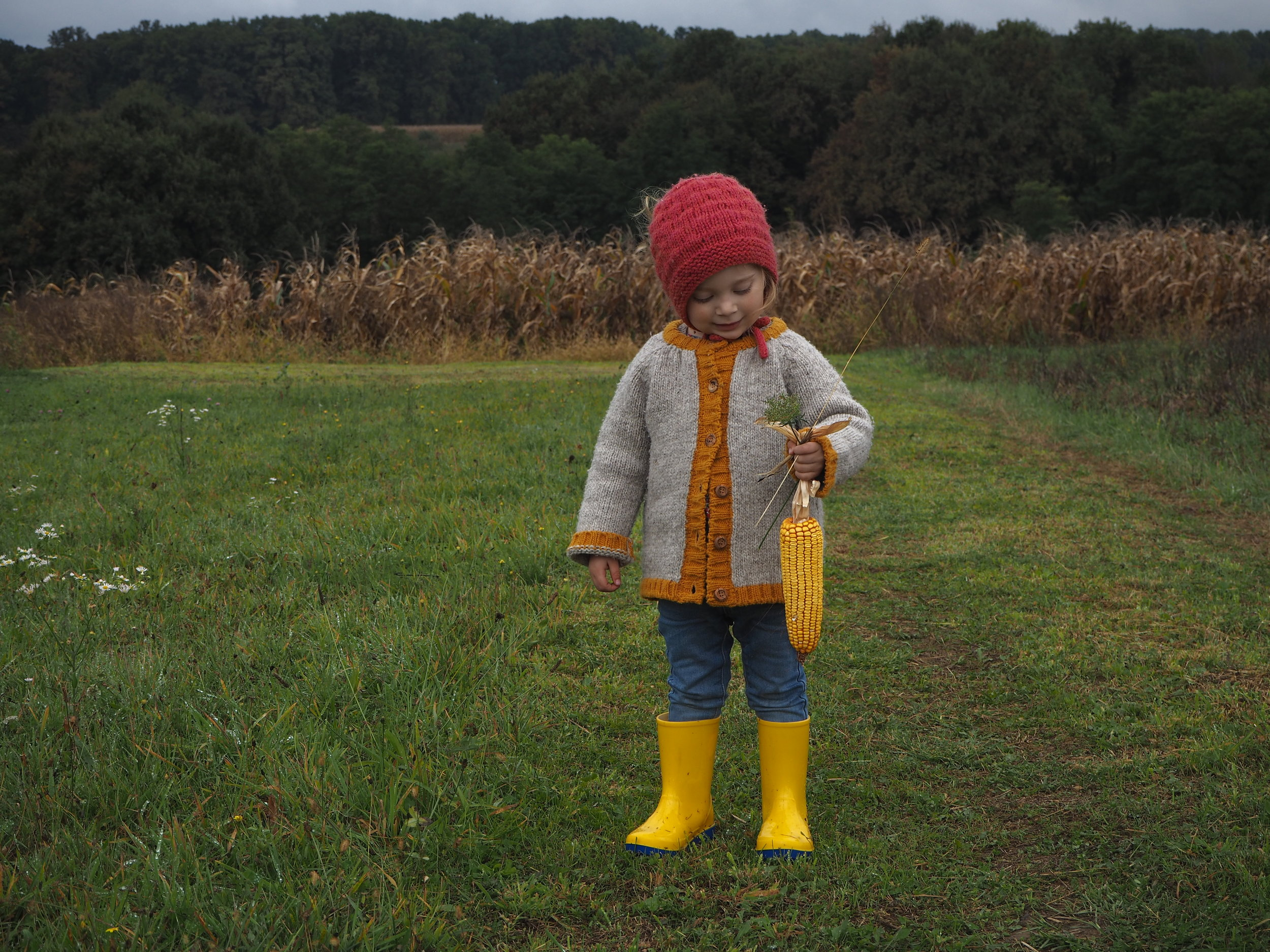 Corn fields, Slavonija