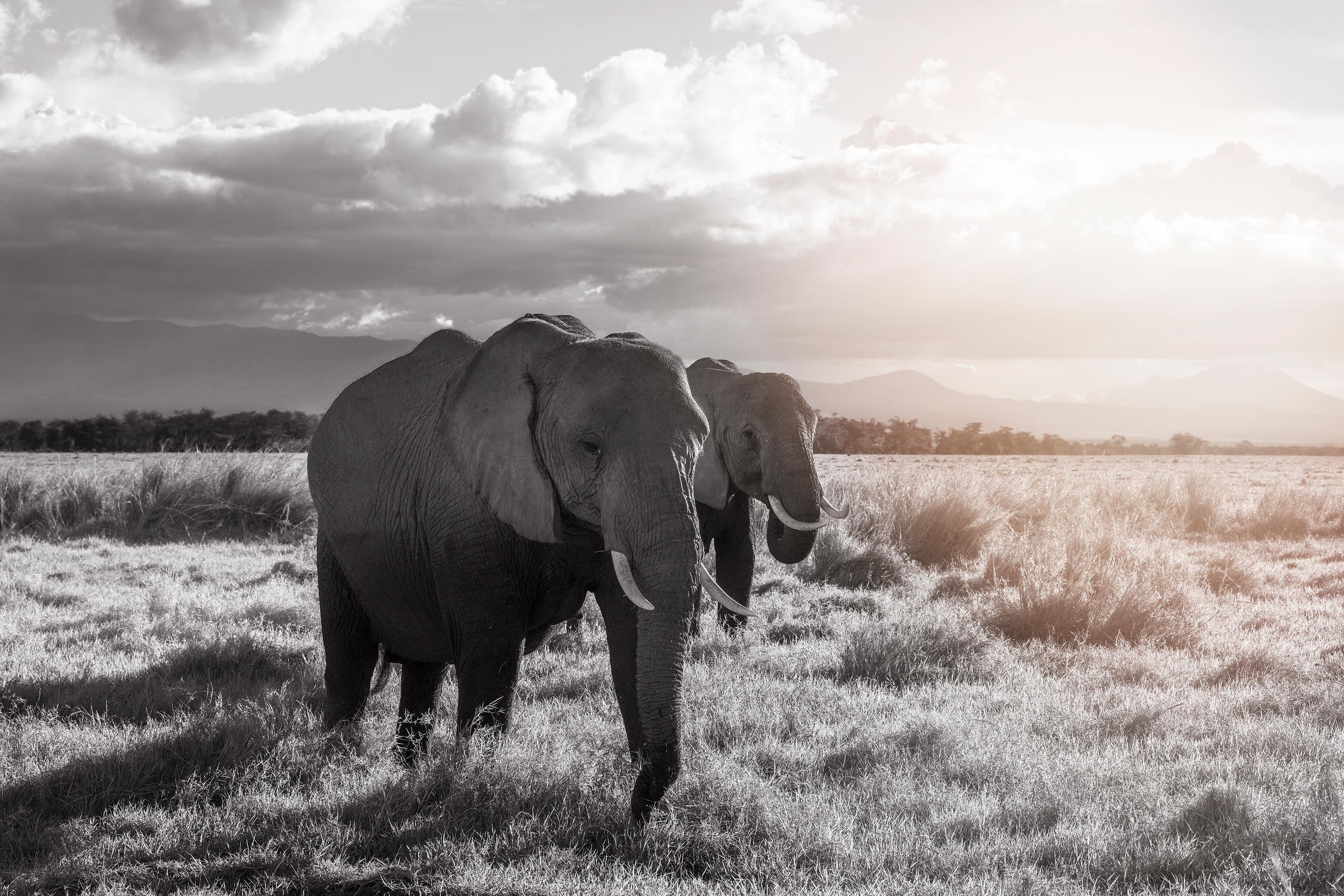 6 Elephants Kenya Amboseli DSC01982+copy.jpg