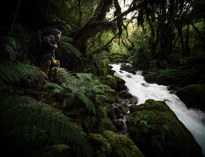 Will Fiordland Forest.jpg