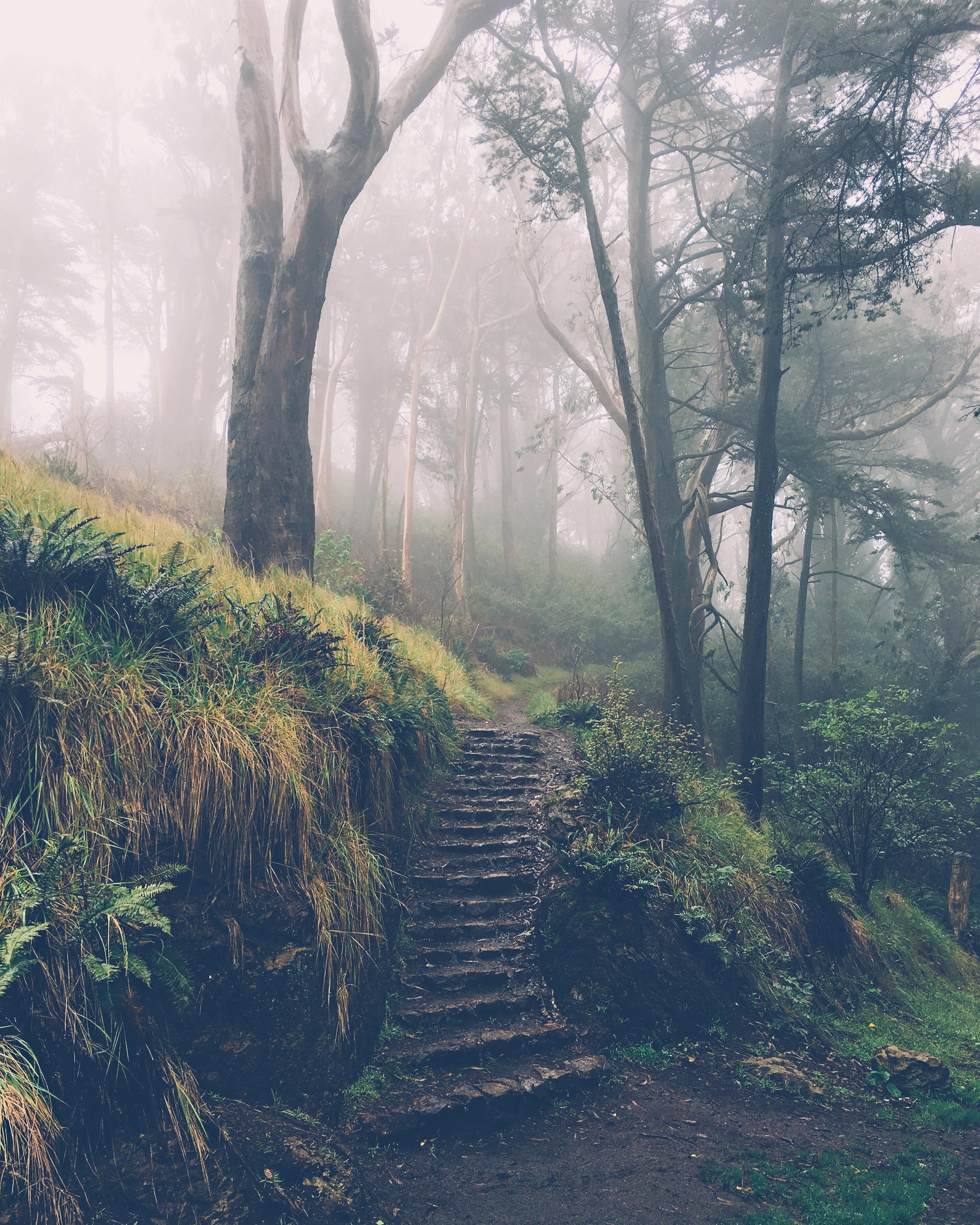 Mt Davidson by Ashley Whitlatch
