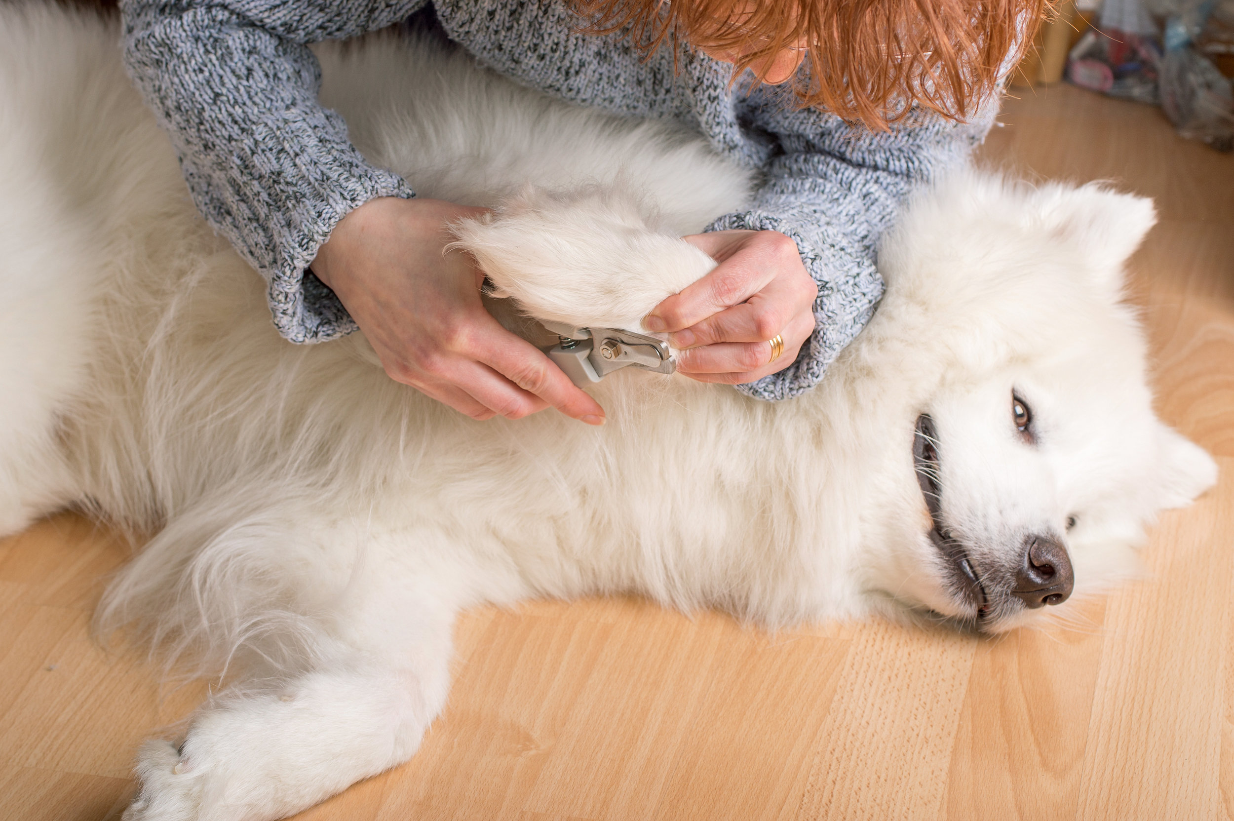 Keeping your dog's nails trimmed is important to his health.