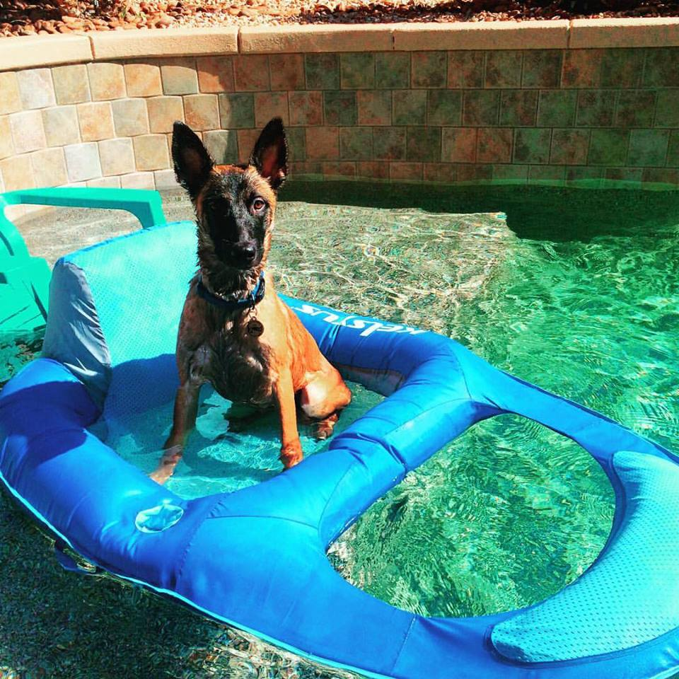 Let your dog have some fun while you are on Vacation! We can play games, teach tricks, or walk you dog.