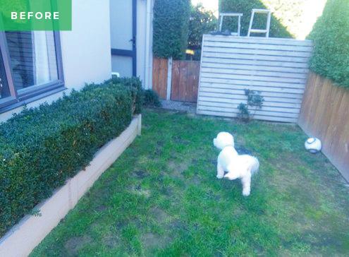 Dog-before.jpg