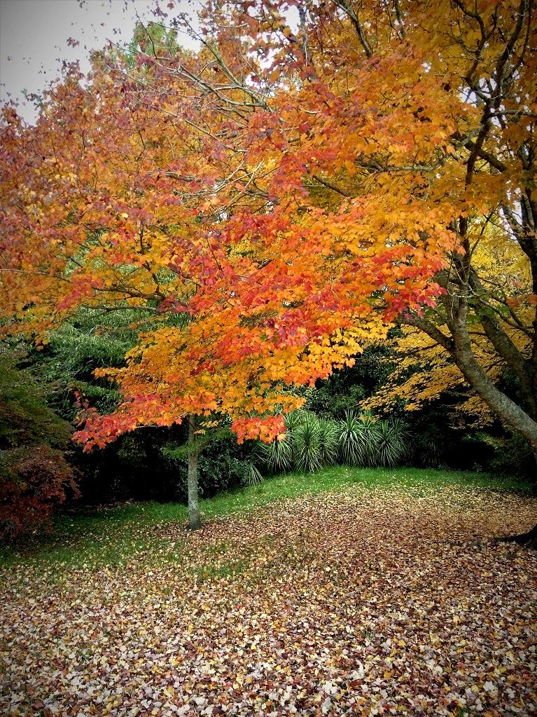 Hamilton's Day Park in Autumn