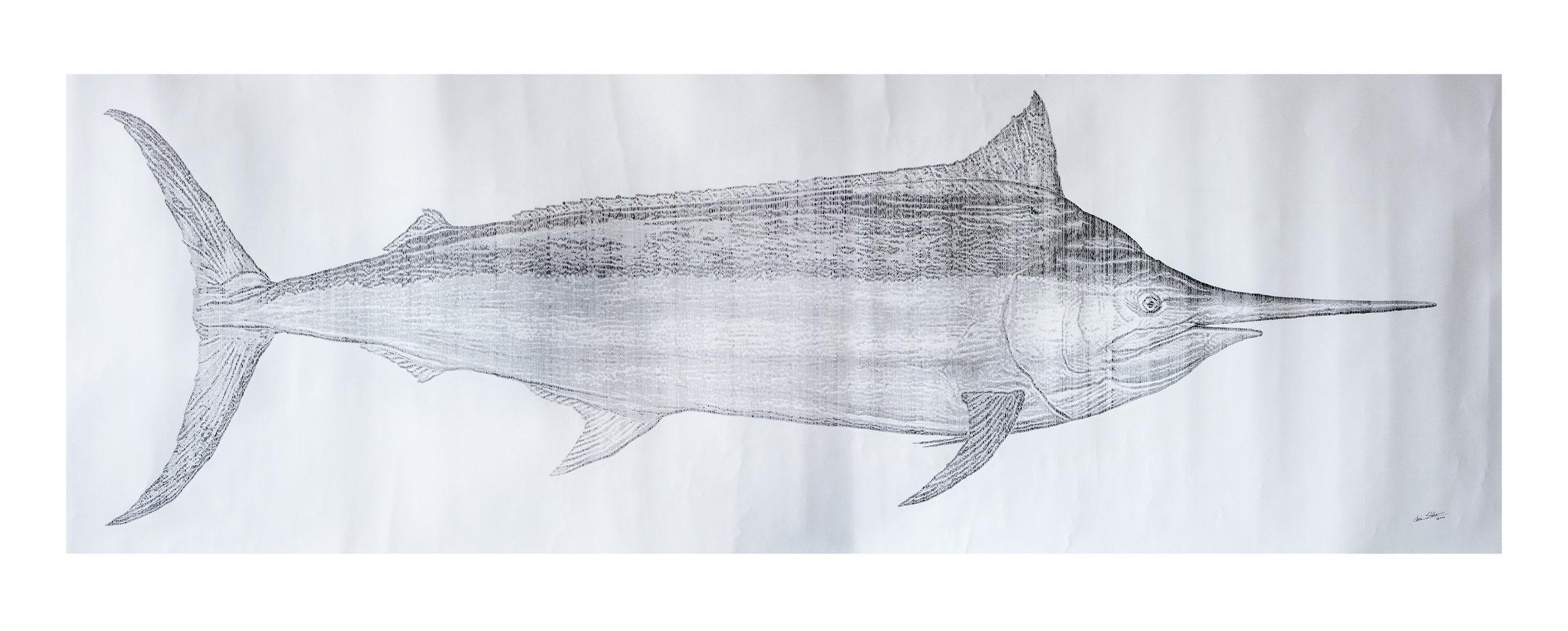 marlin 9.jpg