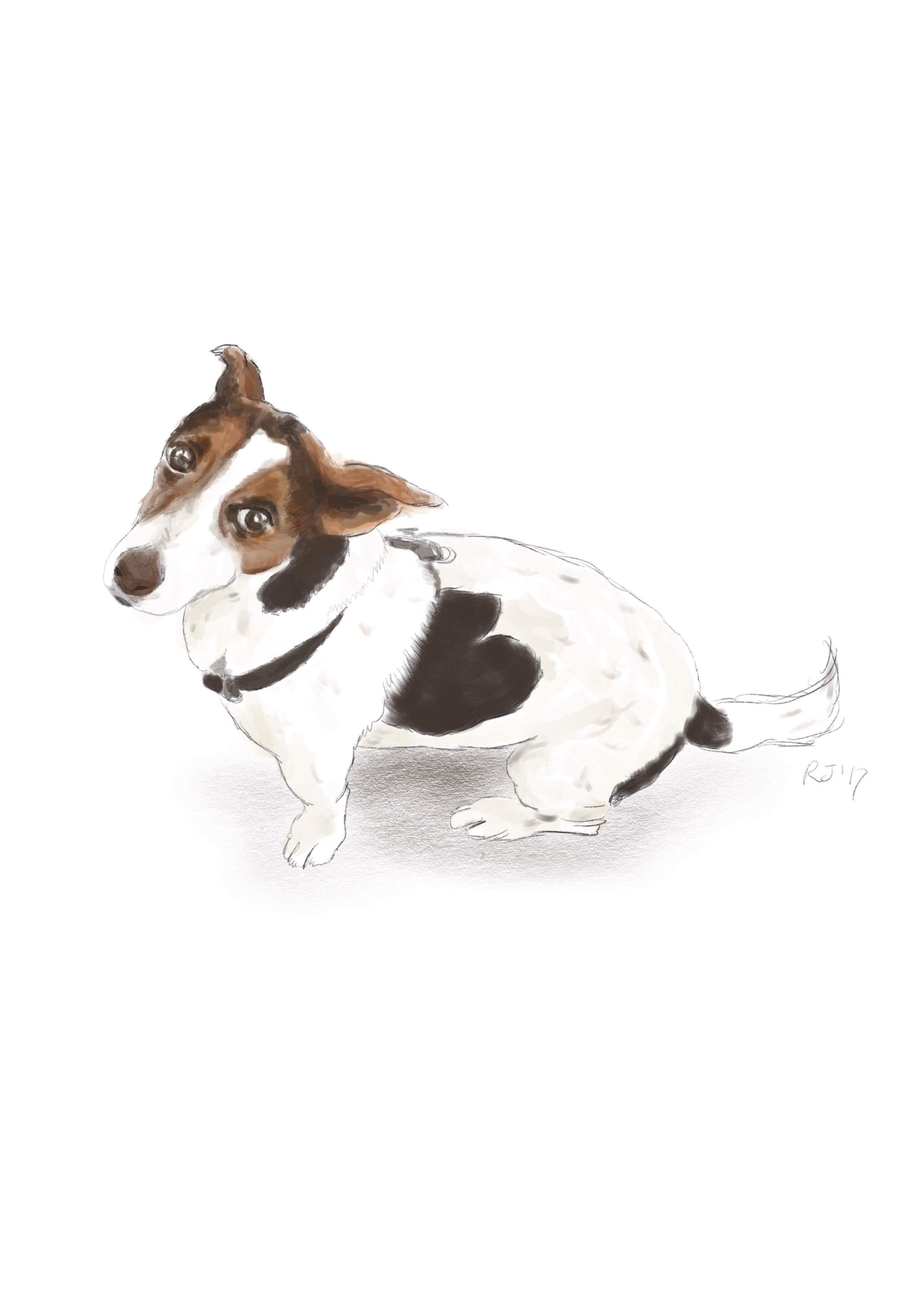 animal portrait.JPG
