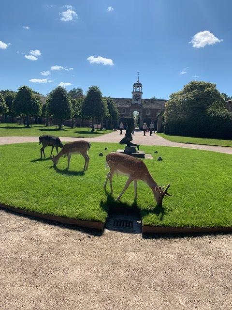 deer at Dunham