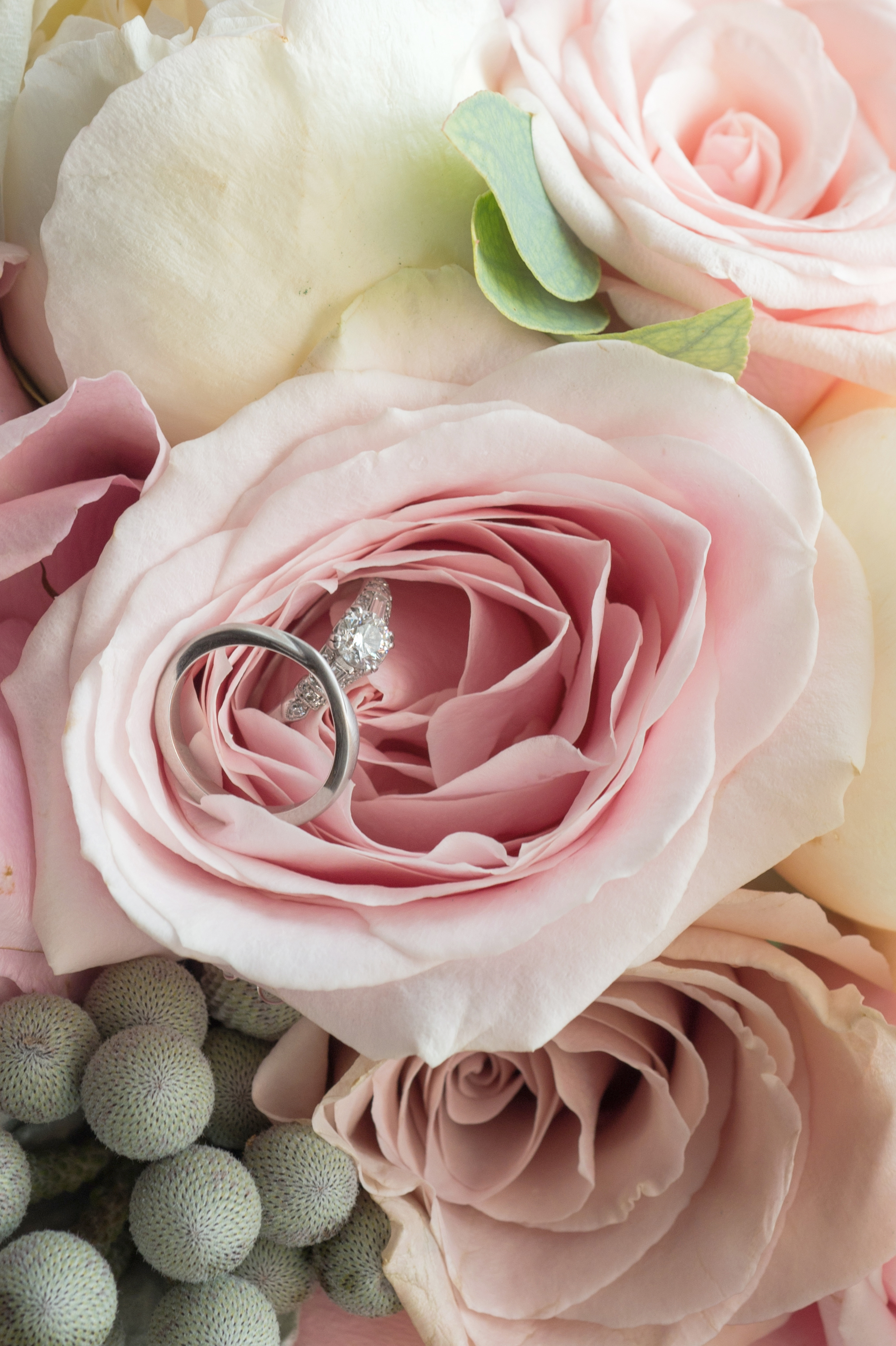 Clickspeed Photography Wedding rings in pink rose