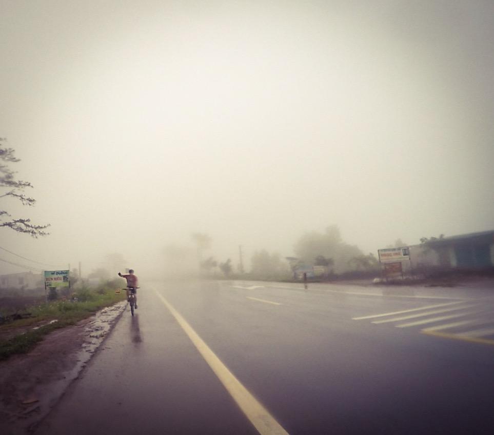 Gorilla in the mist..