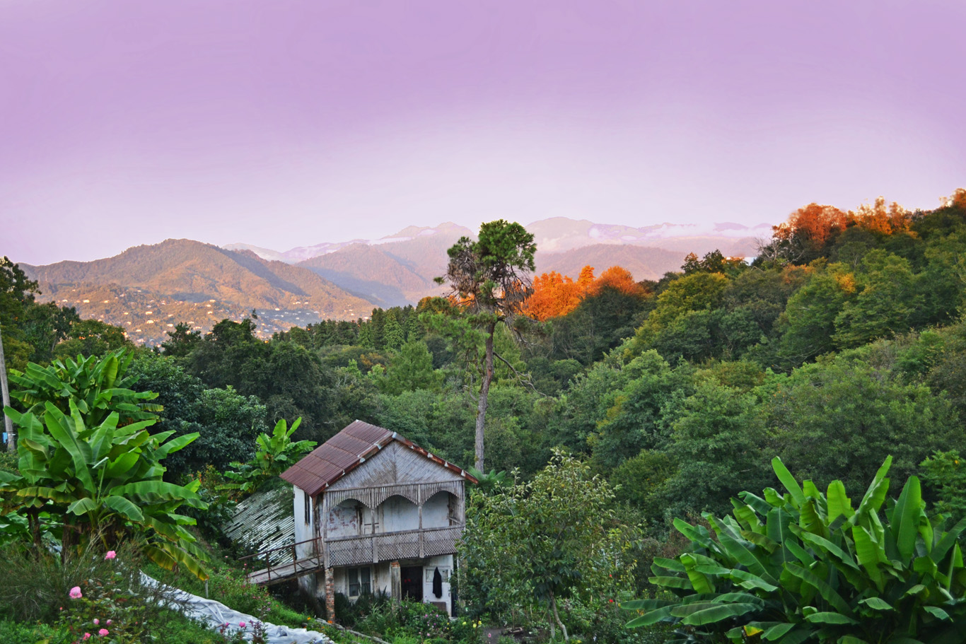 Botanic gardens in Batumi