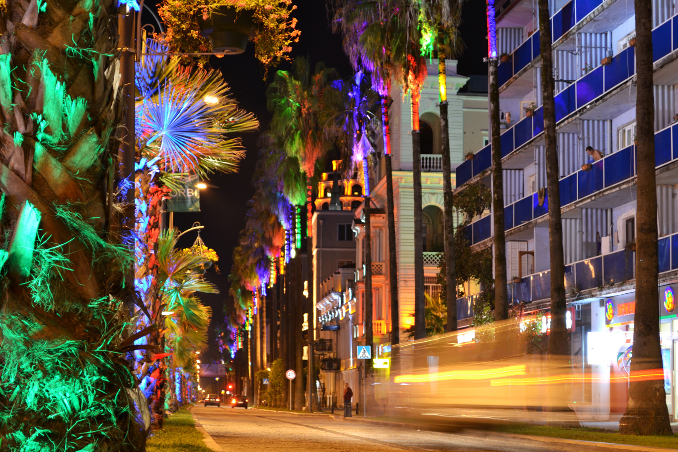Colorfully illuminated palm trees in Batumi Old Town