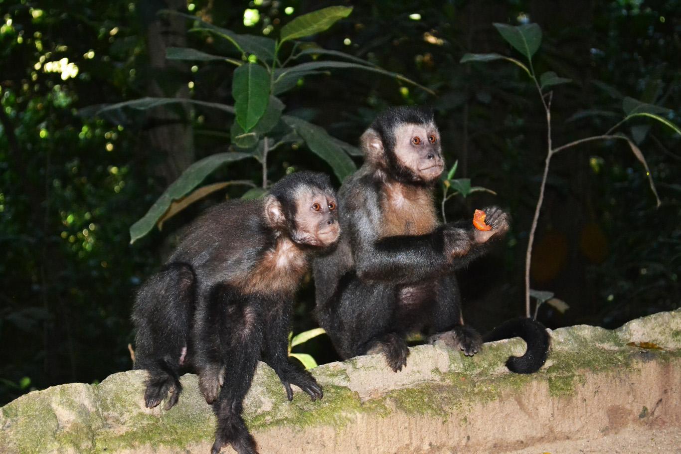 Monkeys in the gardens