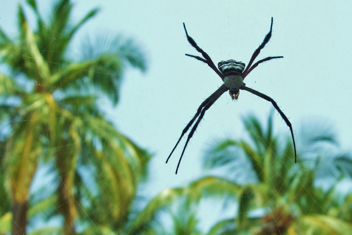 A spider among palms