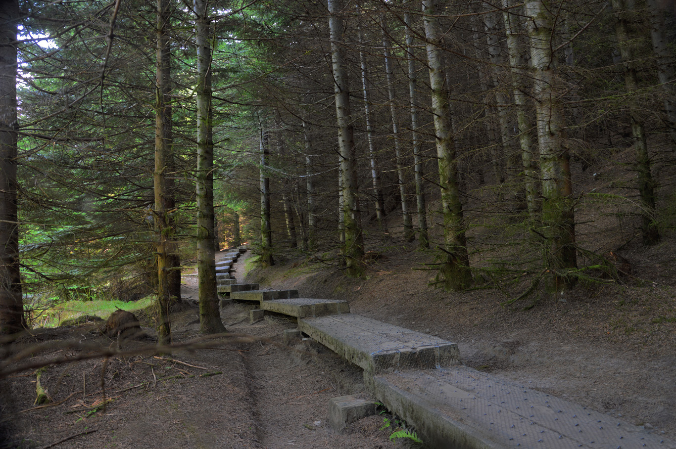 The start of the wooden trail