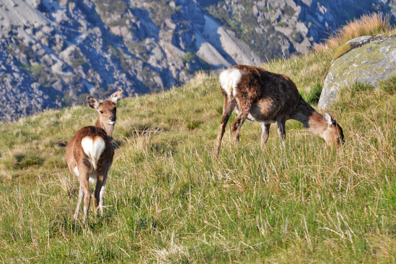 Deer in Glendalough