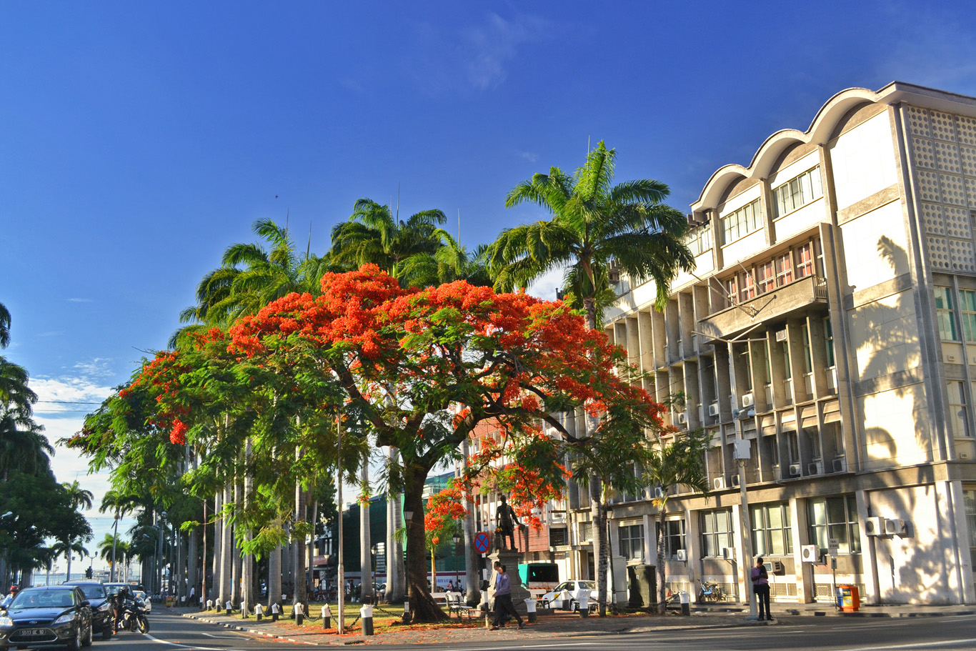 Flame tree in Port Louis