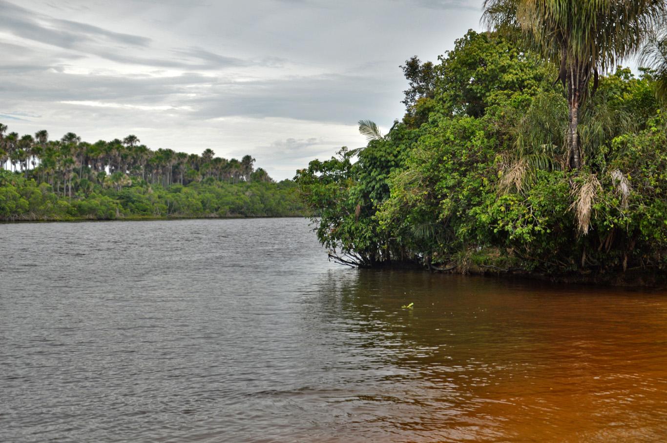 River Preguica and the rainforest