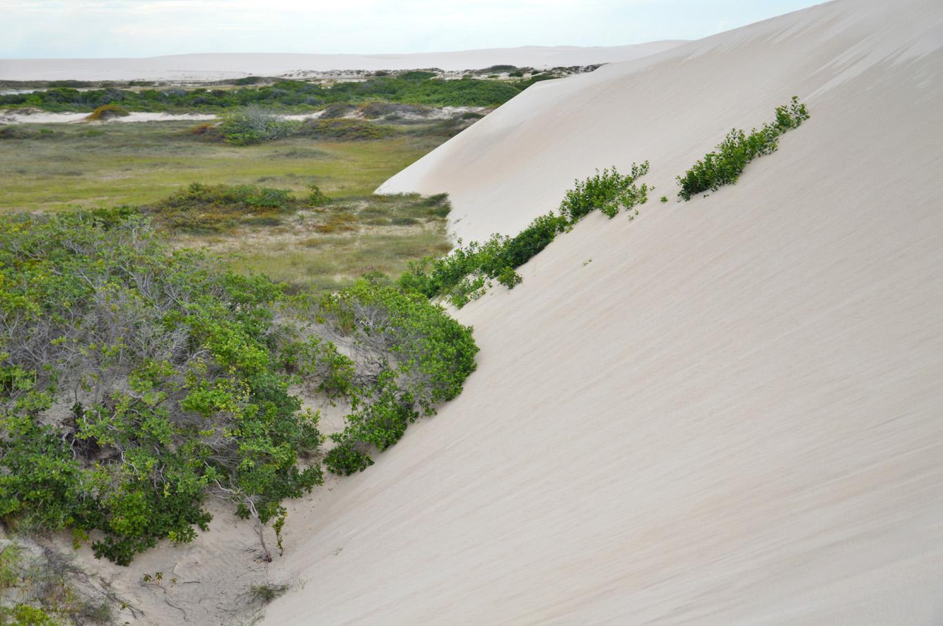 Sand dunes engulfing vegetation