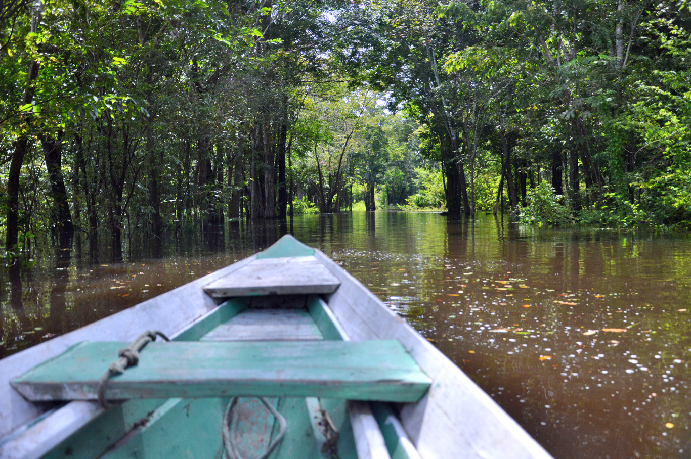 Canoe ride through flooded jungle