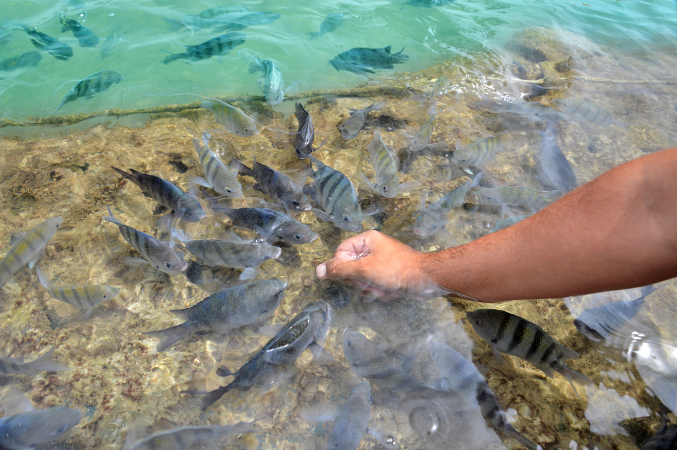 Feeding the fish in a natural pool in Porto de Galinhas